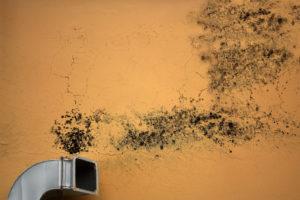 mold building crockett facilities